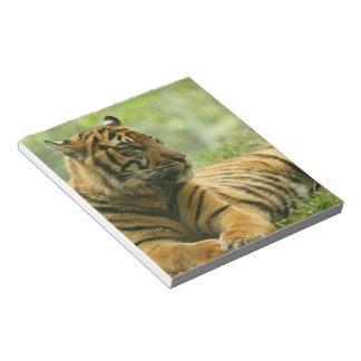 Resting Tiger  Notepad