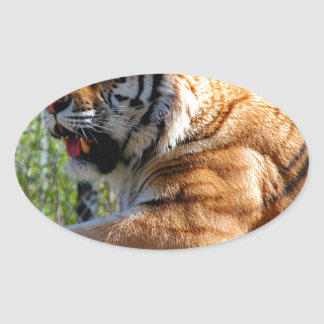 Resting Tiger Oval Sticker