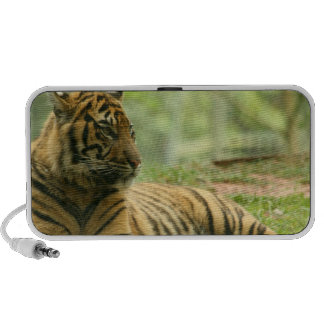 Resting Tiger  Portable Speakers