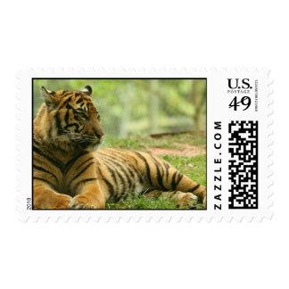 Resting Tiger  Postage Stamp