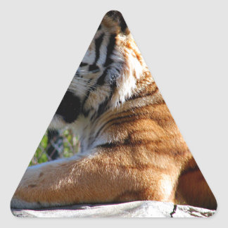 Resting Tiger Triangle Sticker