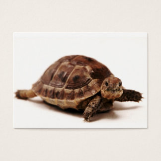 Resting Tortoise Business Card