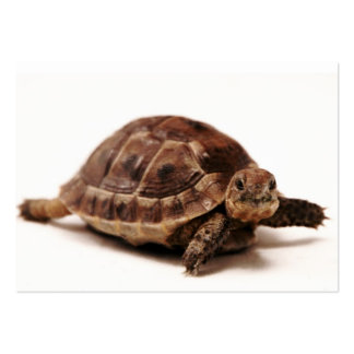 Resting Tortoise Large Business Card