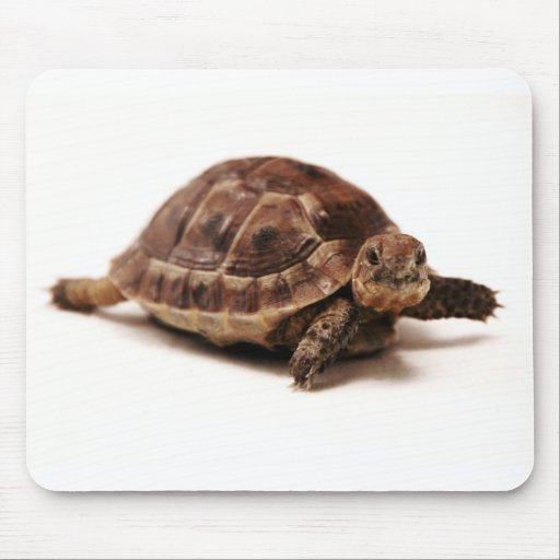 Resting Tortoise Mouse Pads
