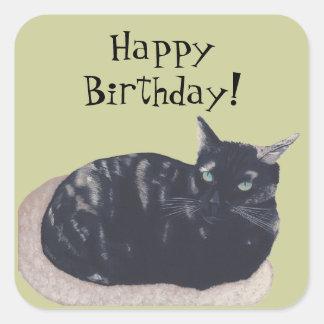 Resting Tortoise Shell Cat Happy Birthday Stickers