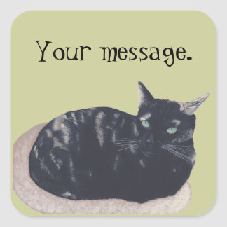 Resting Tortoise Shell Cat Your Message Stickers