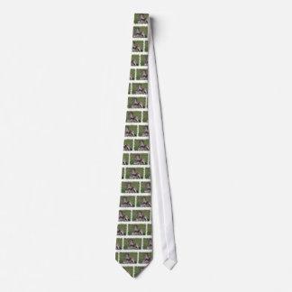 Resting Zebra Men's Necktie