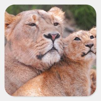 Resto de Cub de la leona y de león antes de la Pegatina Cuadradas