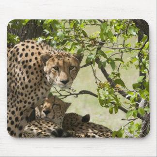 Resto de los guepardos en la sombra alfombrillas de ratón