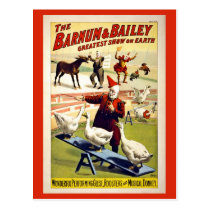 Restored, Barnum and Bailey, geese and donkey Postcard