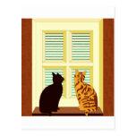 Resuelva los gatos en ventana tarjetas postales