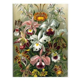 Resumen la 74.a placa de Kunstf de Ernst Haeckel Tarjetas Postales