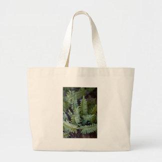 Resurrection Fern - Polypodium polypodioides Bag