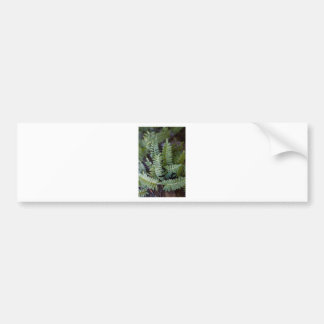 Resurrection Fern - Polypodium polypodioides Bumper Sticker