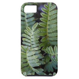 Resurrection Fern - Polypodium polypodioides iPhone 5 Covers