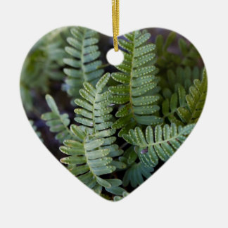 Resurrection Fern - Polypodium polypodioides Double-Sided Heart Ceramic Christmas Ornament