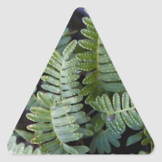 Resurrection Fern - Polypodium polypodioides Triangle Sticker