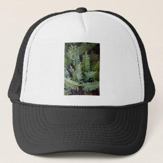 Resurrection Fern - Polypodium polypodioides Trucker Hat