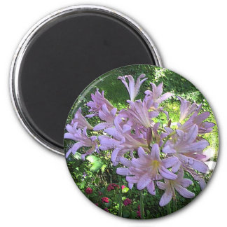 Resurrection Lily Magnet