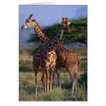 Reticulated Giraffe 2 Greeting Cards