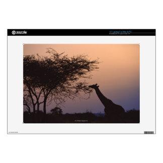 Reticulated Giraffe 2 Laptop Skins