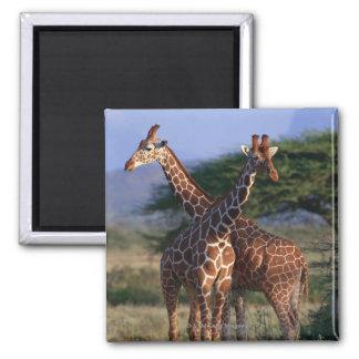 Reticulated Giraffe 2 Magnets