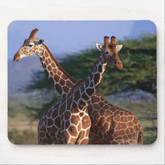 Reticulated Giraffe 2 Mouse Pad