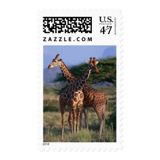 Reticulated Giraffe 2 Postage