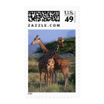 Reticulated Giraffe 2 Postage Stamp