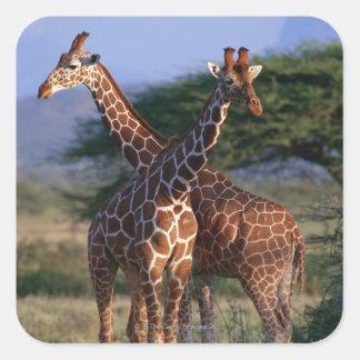 Reticulated Giraffe 2 Square Sticker