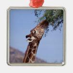 Reticulated Giraffe Christmas Ornaments