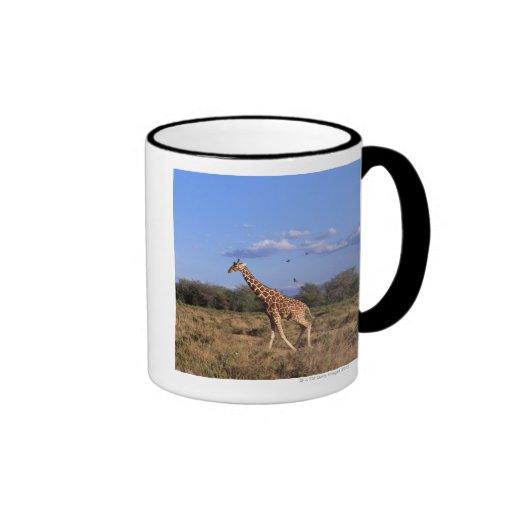 Reticulated Giraffe Coffee Mugs