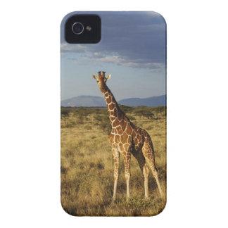 Reticulated Giraffe Giraffe camelopardalis 2 Blackberry Bold Cover