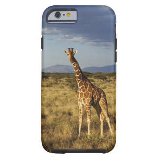 Reticulated Giraffe, Giraffe camelopardalis 2 Tough iPhone 6 Case