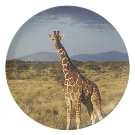 Reticulated Giraffe, Giraffe camelopardalis 2 Melamine Plate