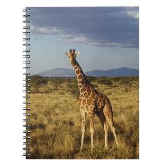 Reticulated Giraffe, Giraffe camelopardalis 2 Notebook