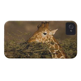 Reticulated Giraffe Giraffe camelopardalis Blackberry Case