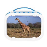 Reticulated Giraffe Lunch Boxes