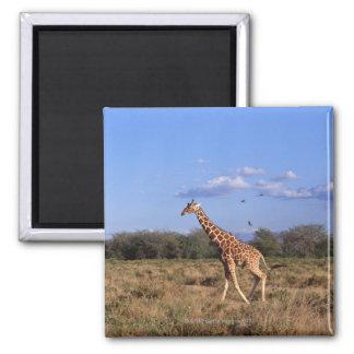 Reticulated Giraffe Magnet