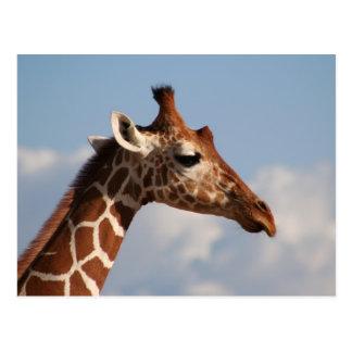 Reticulated Giraffe Portrait Postcard