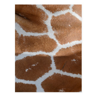reticulated giraffe skin print postcard