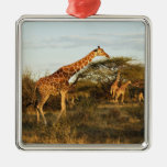Reticulated Giraffes, Giraffe camelopardalis 2 Ornaments