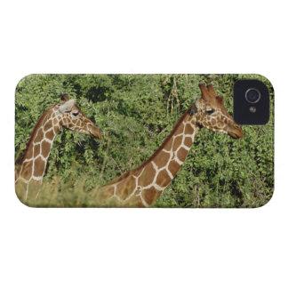 Reticulated Giraffes Giraffe camelopardalis Blackberry Cases