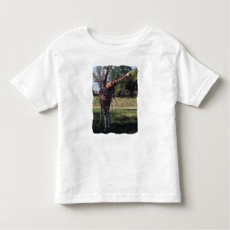 Reticulated Giraffes Toddler T-Shirt