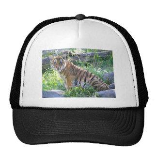 Retrato 2 de Cub de tigre Gorra