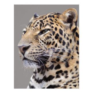 Retrato aislado del leopardo plantillas de membrete