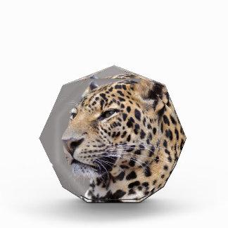 Retrato aislado del leopardo