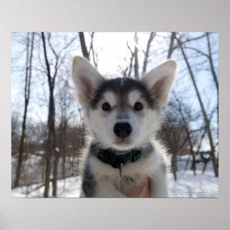 Retrato al aire libre del perrito fornido del perr póster