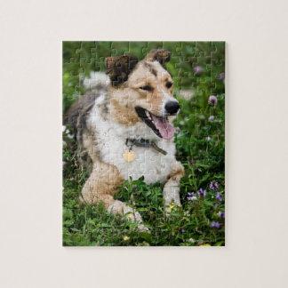 Retrato al aire libre del perro que se acuesta en  rompecabezas