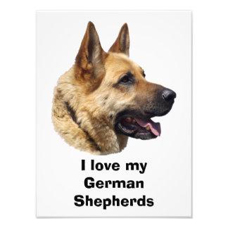 Retrato Alsatian del perro de pastor alemán Cojinete